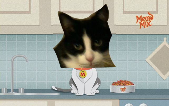 Check out this cat singing the Meow Mix jingle. Create your own video and you could win $5,000*! *See official rules.