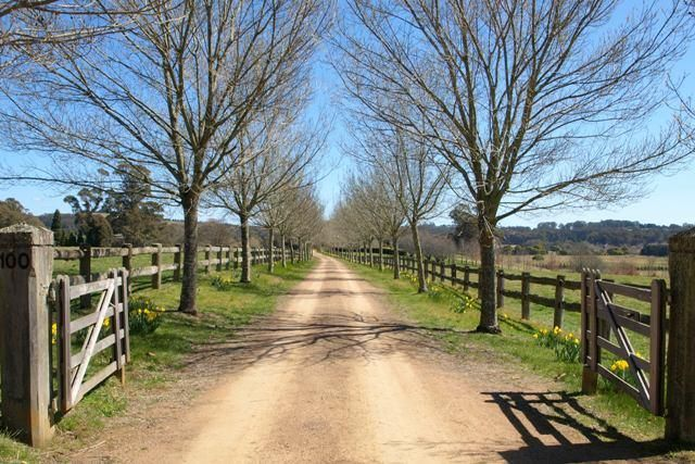 I don't have the luxury of a gorgeous long tree lined driveway but I can always dream!