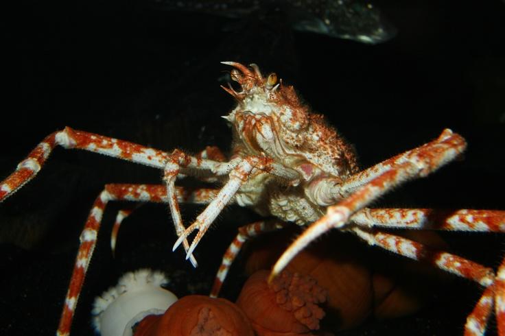 34 Best Images About Animals At Georgia Aquarium On