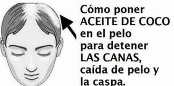 Cómo Poner Aceite De Coco En El Pelo Para Detener Las Canas Caída Del Pelo Y La Caspa Canas Prematuras Caida Del Pelo Caspa
