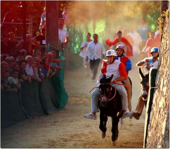 Go watch the Palio dei Ciuchi donkey race in the village of Campagnatico in Maremma Tuscany Italy. It's no less nerve wracking than Siena's palio!