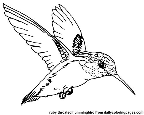 Elegant Texas Ruby Throated Hummingbird Bird Coloring Pages