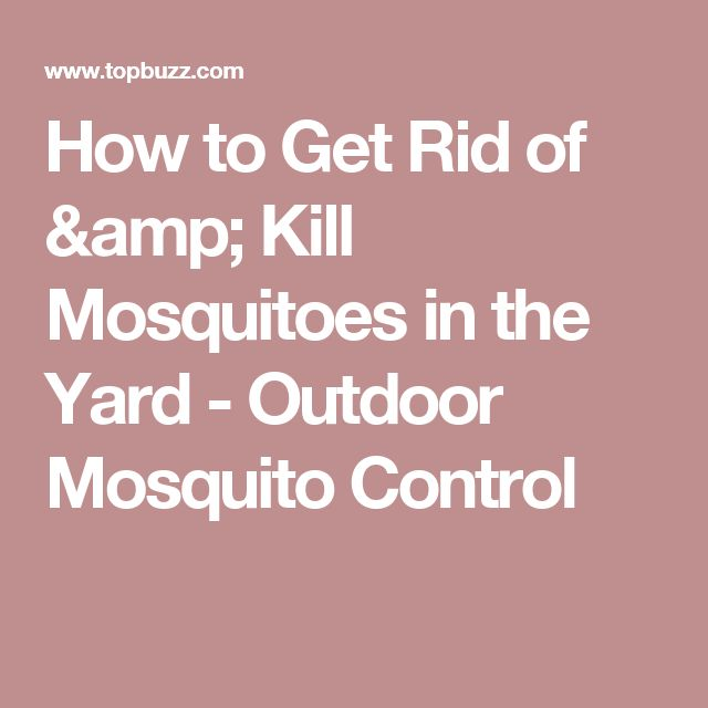 Best 25 How To Kill Mosquitoes Ideas On Pinterest