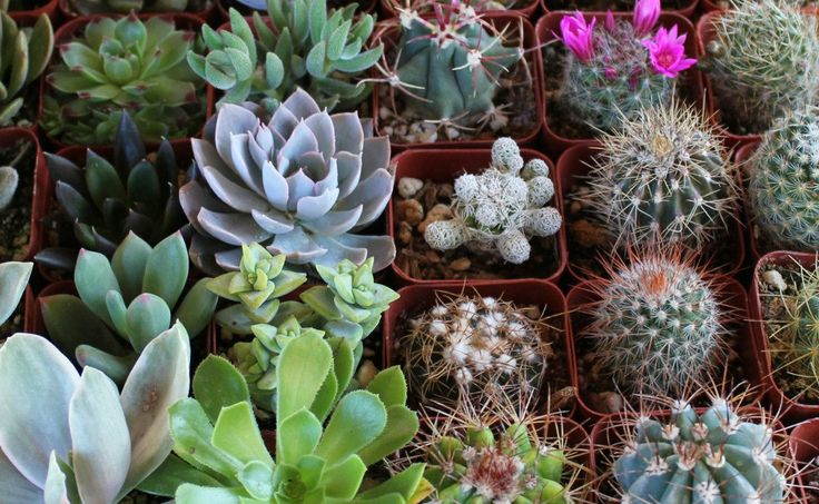 NINE (9) Succulent & Cactus Collection  Awesome for Party or Wedding Favors and Gifts succulents table decor favor. $14.00, via Etsy.