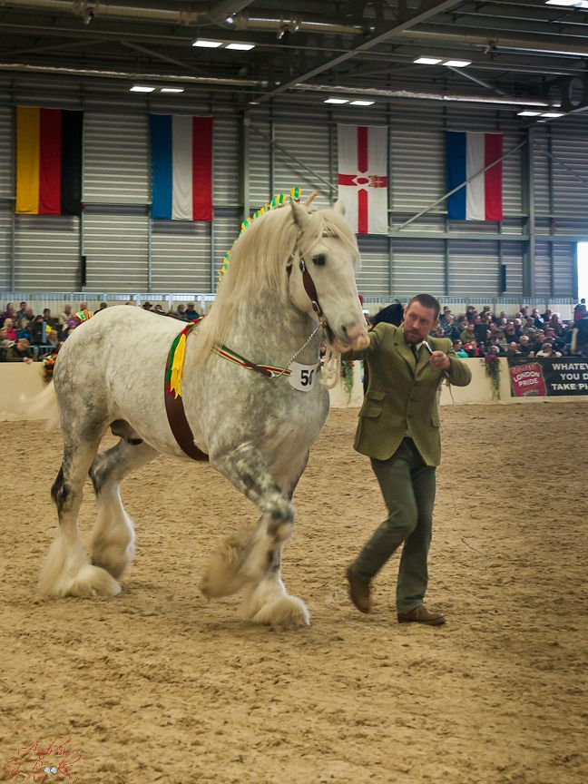 All sizes | Shire Horse Spring Show Images 2012-20 | Flickr - Photo Sharing!