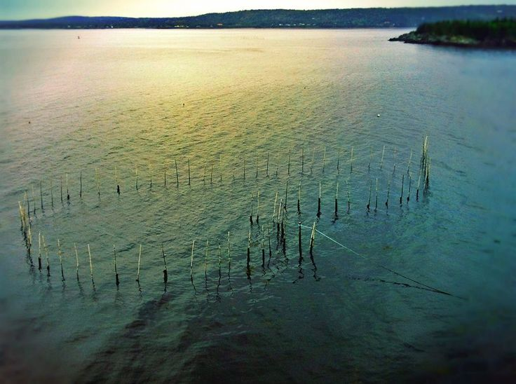 North Head Weir, Grand Manan, New Brunswick, Canada by Morgan Guptill