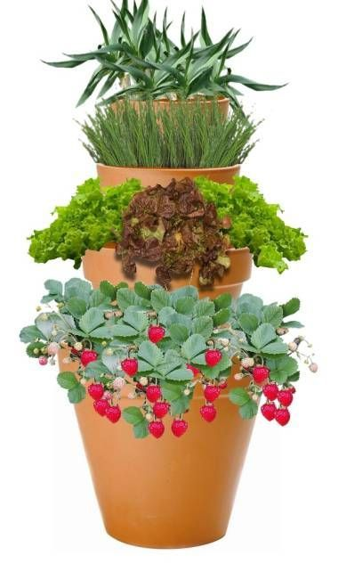 1000 Ideas About Potager Bio On Pinterest Le Potager Vegetable Gardening And Potager Garden