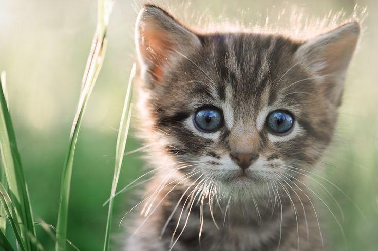 Oto kot :) O.O #cat #cats #kot #fototapeta #fototapeta24pl #animals #animalsphotography