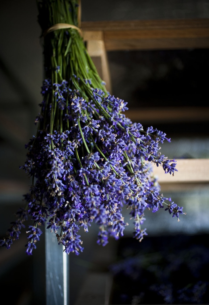 Lavender dries upside-down before it becomes and extract, and is infused into our hand, face, and body creams. jurlique.com
