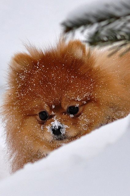 Red Pom I need this baby!