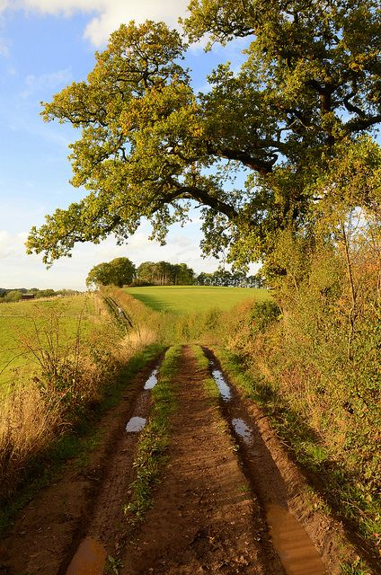 A muddy walk in the countryside near Barnt Green Worcestershire England by Christopher Price