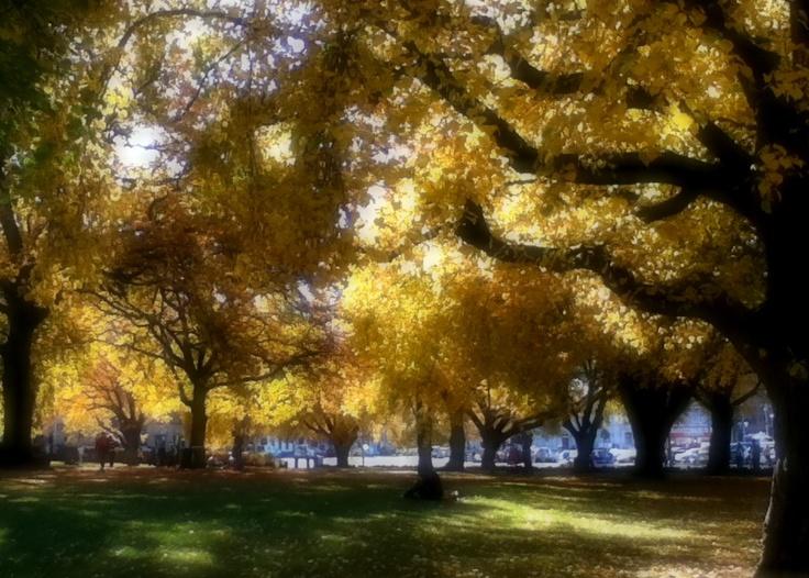 Fall Leaves at Salamanca, Tasmania