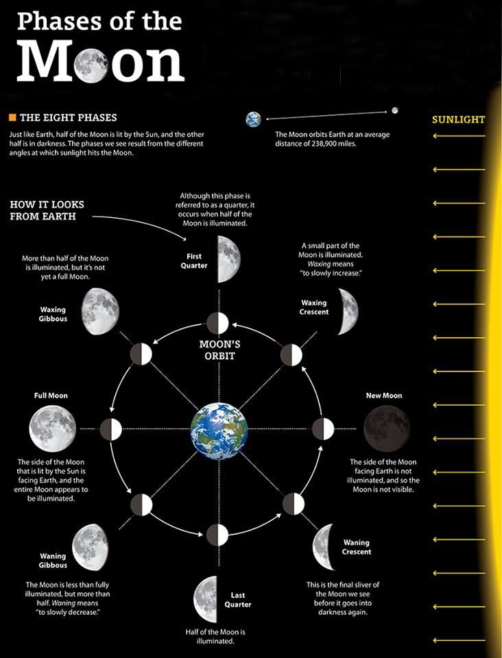 diagram of moon phases for kids gallery