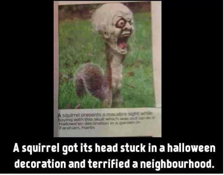 Top 25 Ideas About Funny On Pinterest Funny Spider And