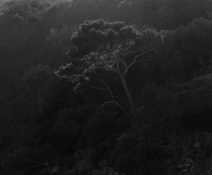 """Winner of the Hariban Award 2014, Awoiska van der Molen """"Her images are captured in single exposures of up to half an hour, then painstakingly printed in her darkroom on large format, silver gelatin paper. The methodology is unapologetically old-fashioned, and the results extraordinary powerful."""""""