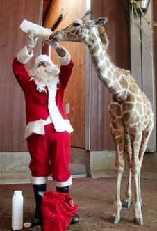 Zookeeper Cheer!