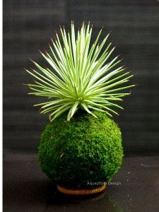 Kokedama. To keep your new friend alive and happy, either spray him daily with water, or remove from the hook and soak a couple of times a week in water. (depending on the plant and how much water it requires).