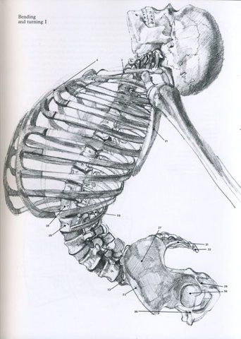 Skeleton in movement