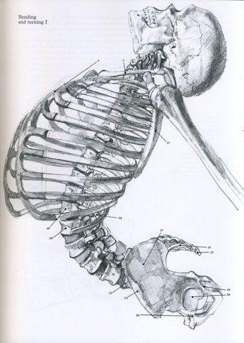 Skeleton in movement