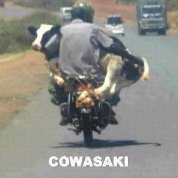 This is Bali / Indonesia   COWasaki's are the preferred motorbike brand there as parts are plentiful