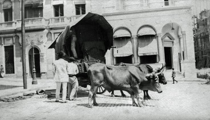 Ox and cart in Puerto Rico 1913