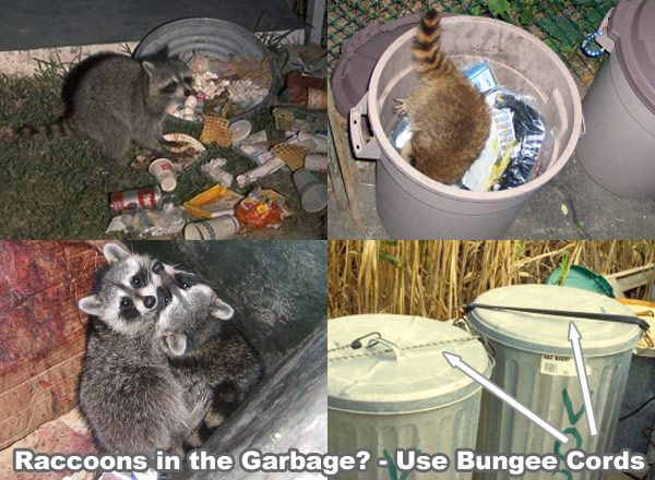 46 best dog proof trash cans images on pinterest raccoons bear and bears How to keep raccoons out of garden