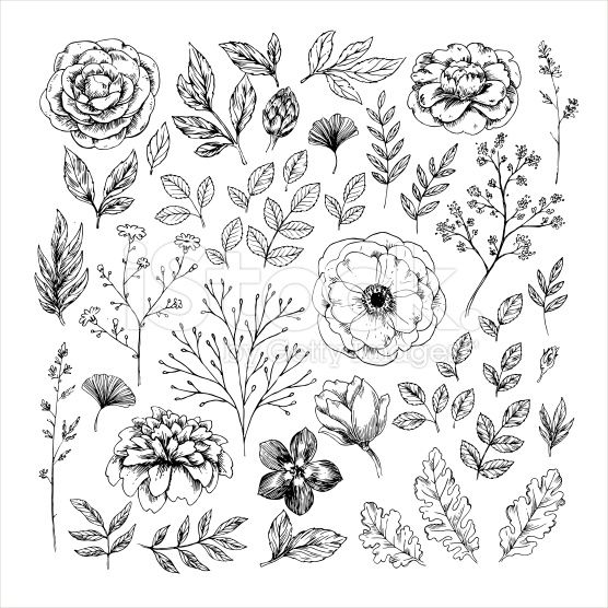 Hand drawn leaf and flower collection. Vector illustration royalty-free stock vector art