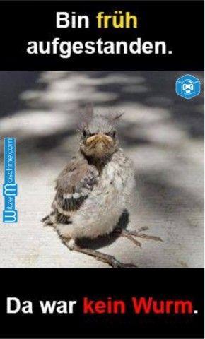Lustige Bilder Guten Morgen - Der frühe Vogel fängt den Wurm