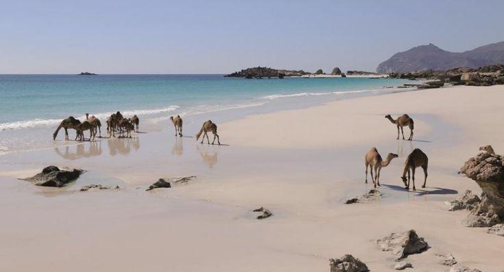 #oman #beach #salalah #holidays #christmas #travel