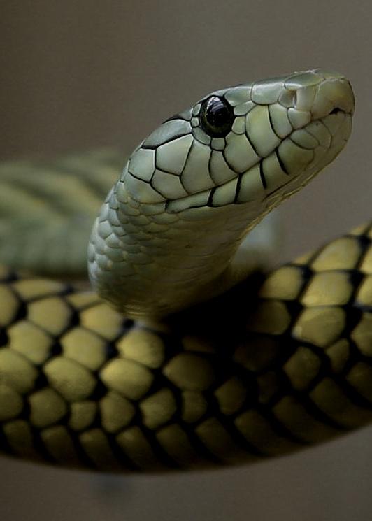 :@ #snakes #reptiles #topanimals