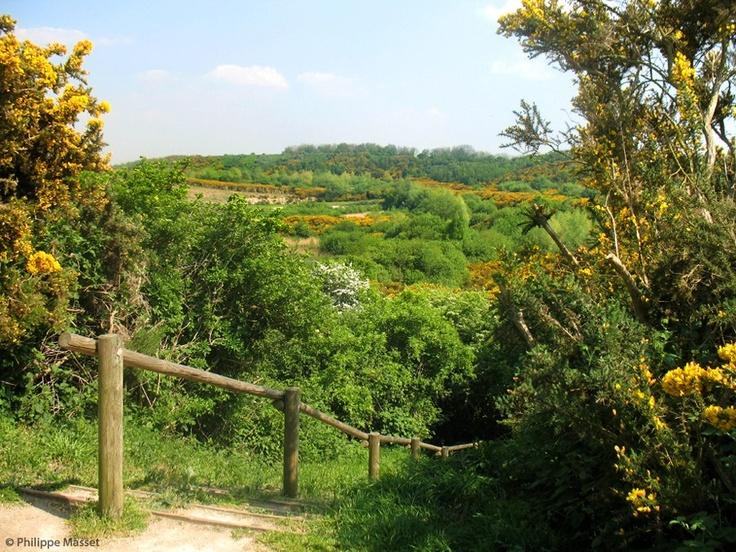 Le sentier du Fartz, à Wissant (Pas de Calais, Pays du Boulonnais) : Site naturel protégé abritant une faune et une flore exceptionnelle et très diversifiée.