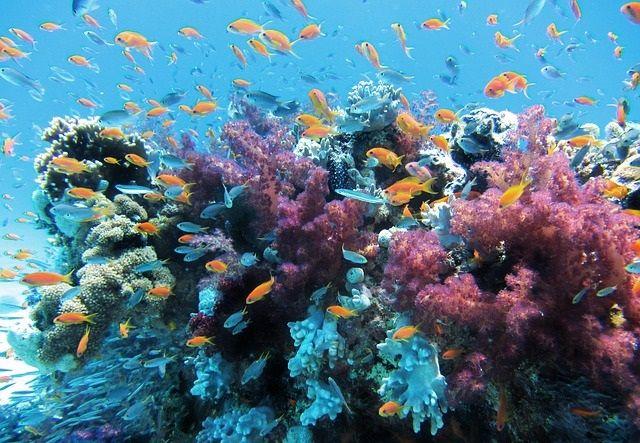 Você está prestes a viajar por um incrível safári da vida selvagem submarina, onde muitas criaturas estranhas e coloridas residem. Não deixe de conferir este post super interativo que preparamos pra você!