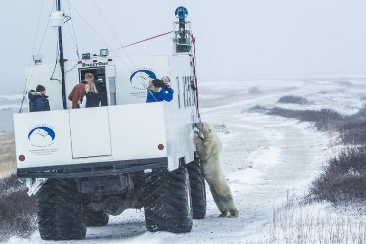 A Stunning Google Maps Street View Project That Captures Imagery of Polar Bears In Their Natural Habitat