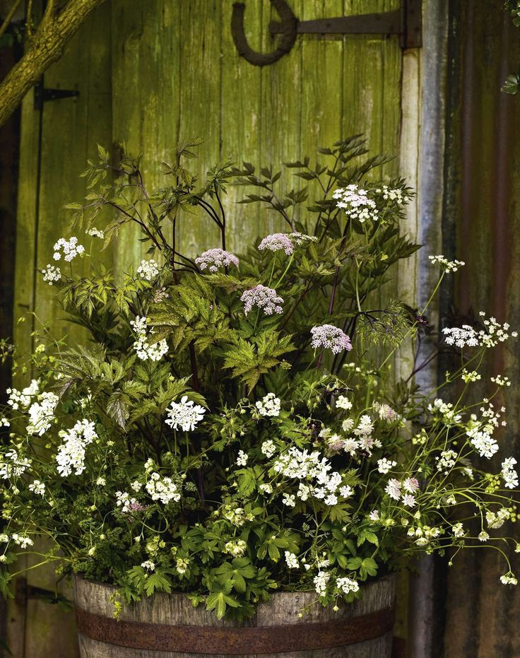 Pimpinella major 'Rosea', Astrantia 'Buckland', Geranium phaeum, Actaea simplex 'Brunette' & Orlaya grandiflora; Gardens Illustrated, May 2016