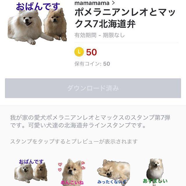レオとマックスのラインスタンプ第7弾販売開始しました。かわいい北海道弁で癒されてね😋 #ラインスタンプ販売中#北海道弁#道産子 #北海道出身#もこもこ #もふもふ #ふわふわ  #ポメラニアン #ポメラニアン部 #愛犬 #癒やしわんこ#超かわいい #オフコース  #小田和正さん