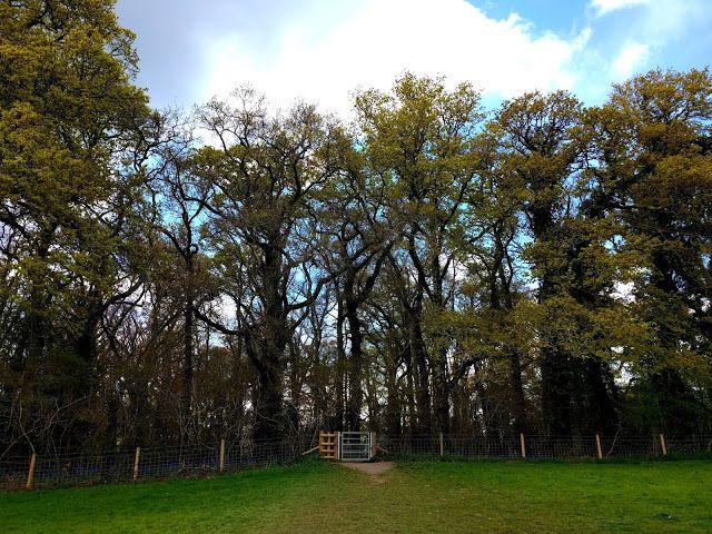 Entertaining Elliot: Beautiful Bluebell Woods - Pamphill, Dorset