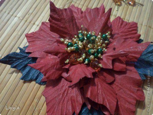 Пуансеттия-Рождественская звезда.   Страна Мастеров