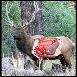 Field Dressing A Deer