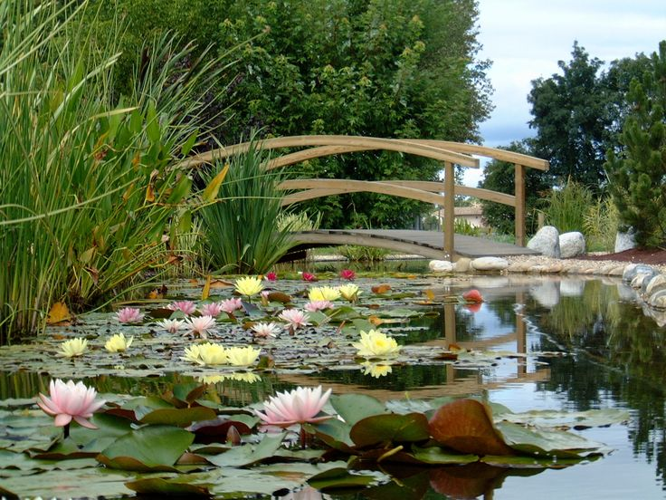 585 best Bassin de Jardin images on Pinterest Ponds, Water