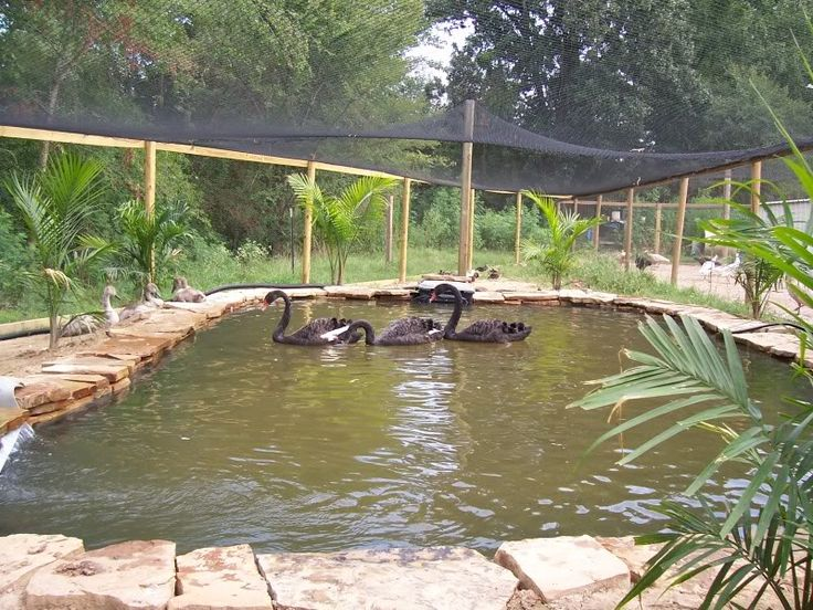 161 best images about duck pool ideas on pinterest for Backyard duck pond