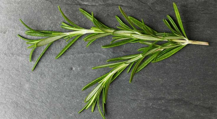 Rosemary From A To Z: 26 Things You Didn't Know About Rosemary: Recipe, 26 Facts, Rosemary Facts, Finding, Herbs Gardens, 26 Things, Fyi Food, Didnt, Gardens Herbs