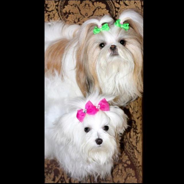 Daisy and Dixie