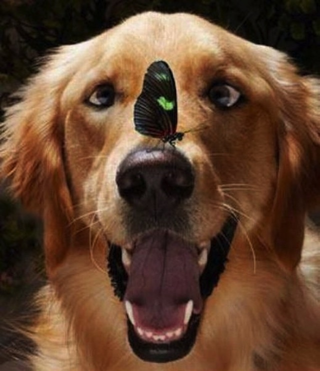 Don't know who's more patient, the dog or the butterfly!