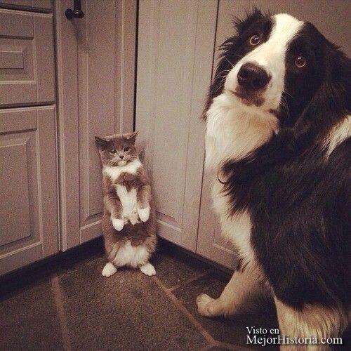 """Toda la vida hemos oído esta frase """"Están Todo El Día Como el perro y el Gato"""" cuando alguien no se llevaba bien, (seguro que te suena de muchas ve..."""
