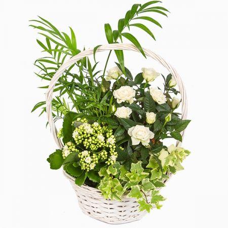 Plus de 1000 id es propos de fleurs sur pinterest for Recherche plante