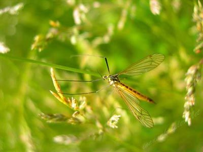 #sivrisinek #sinekisiriklari #yararlibilgiler #faydalibilgiler Sivrisinek Isırıklarına Karşı 12 Doğal Çözüm