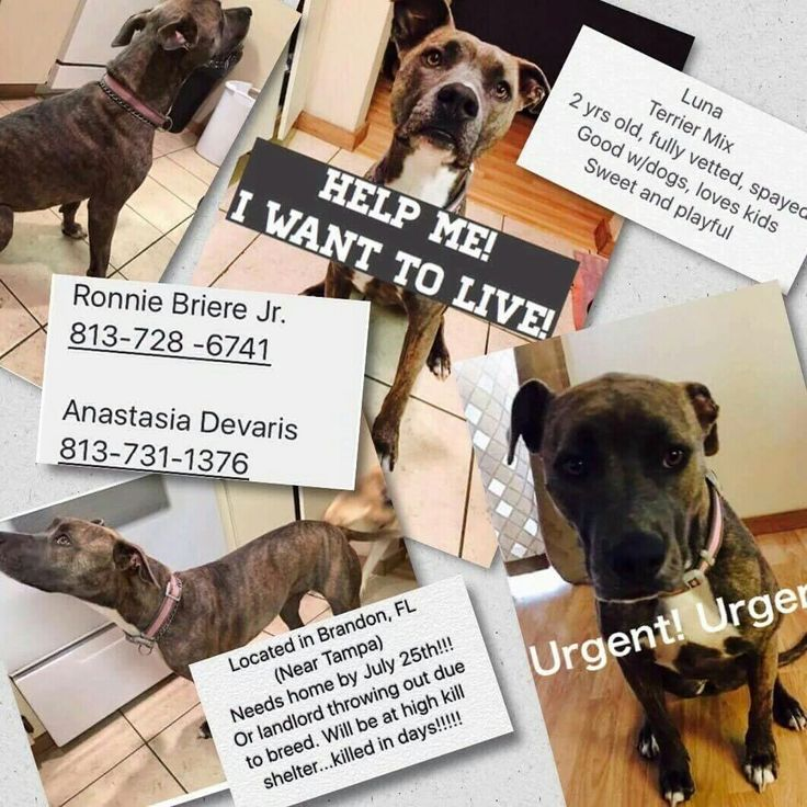 189 Best Images About Dogs Urgent Adoption Foster Rescue