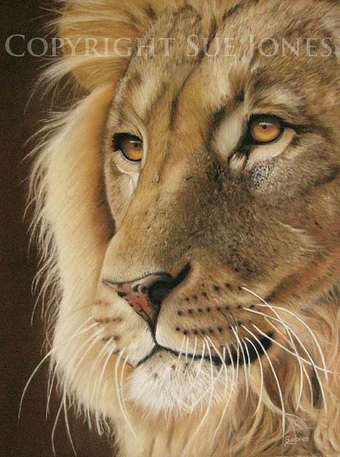 by Sue Jones Art
