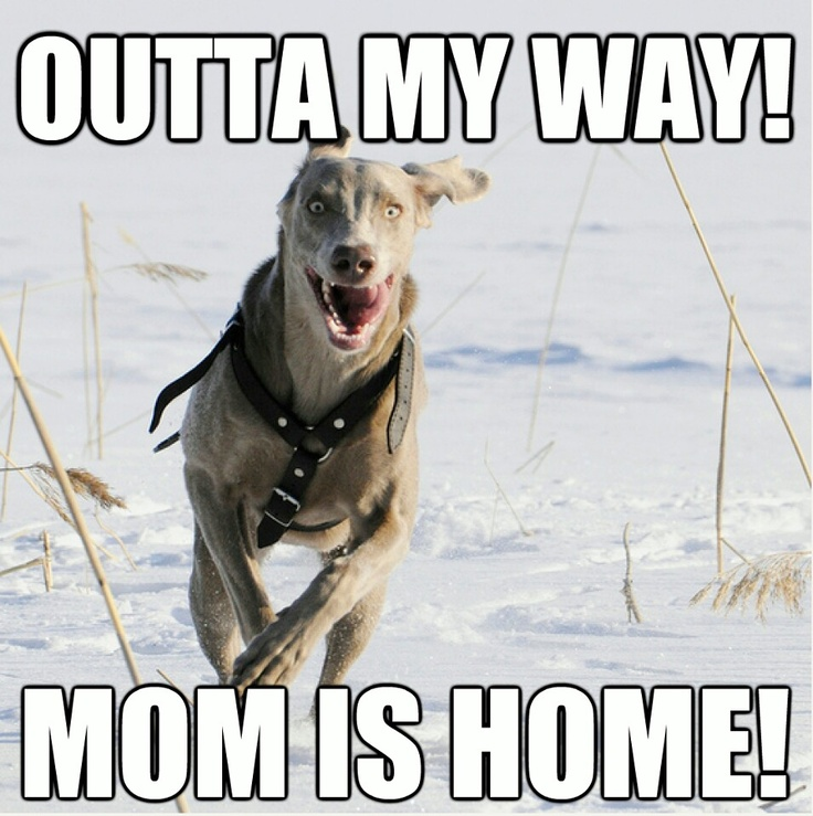 My dogs.....every time!!