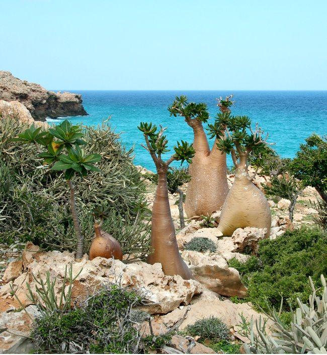 YEMEN # 2 - Isola di Socotra